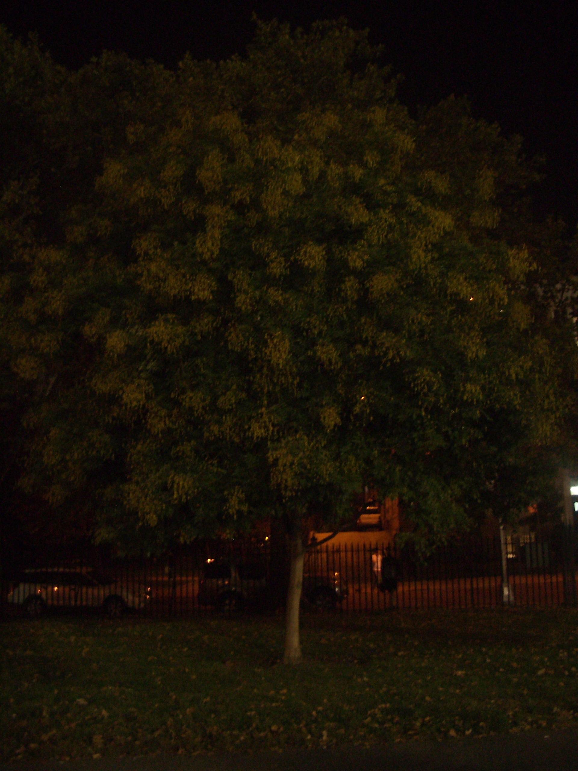 tree in mccarren park